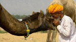 Pushkar Camel Fair in Pushkar, India