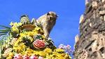 Lopburi Monkey Banquet Festival in Lopburi, Thailand
