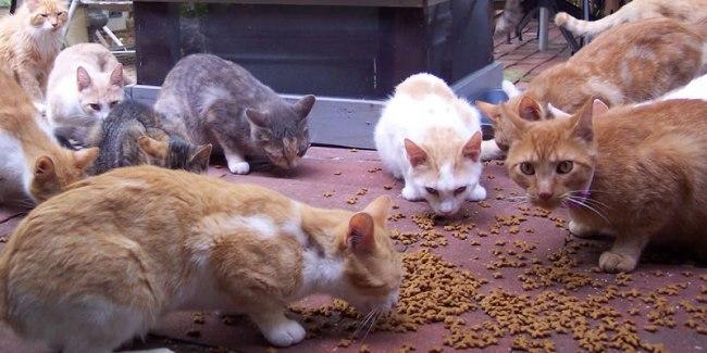 Cat Herders Day