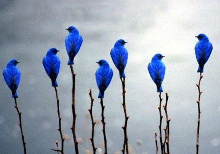 National Bluebird of Happiness Day