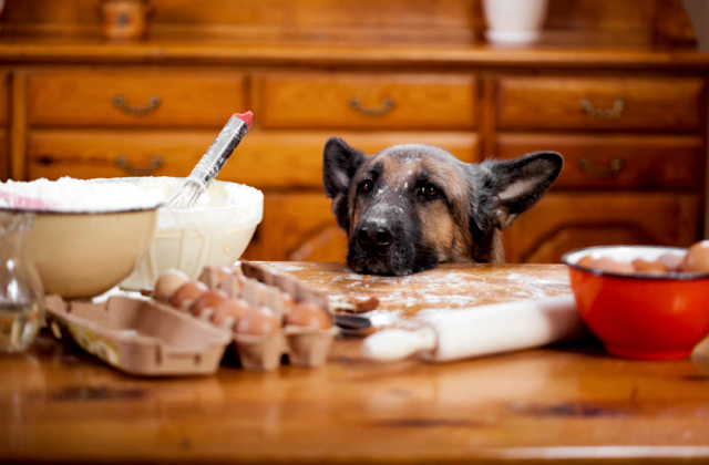National Go Cook For Your Pets Day