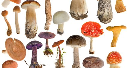 National Mushroom Day