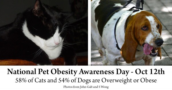 National Pet Obesity Awareness Day