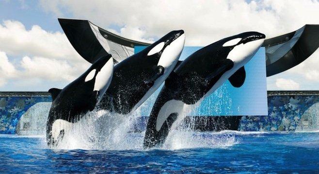 Shamu the Whale Day