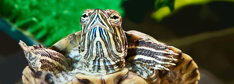Turtle Adoption Day