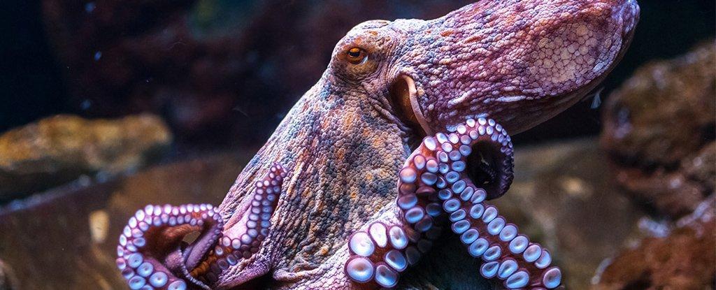 World Octopus Day