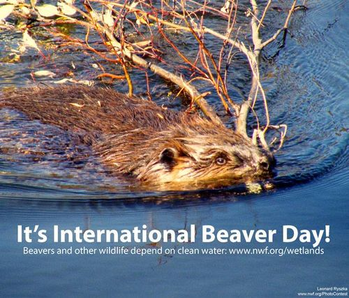 International Beaver Day