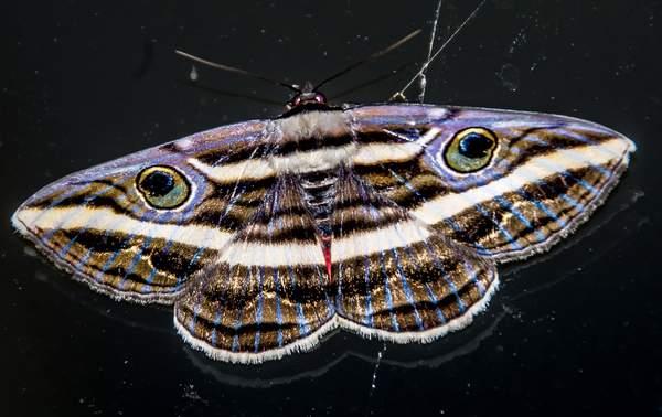 Moth-er Day
