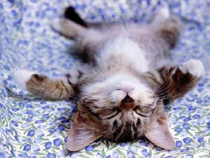 Nap Day
