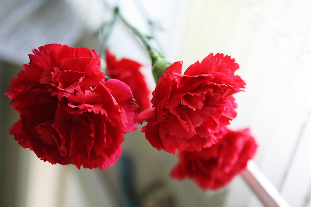 National Carnation Day