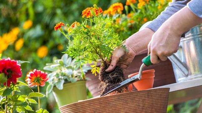 National Gardening Exercise Day