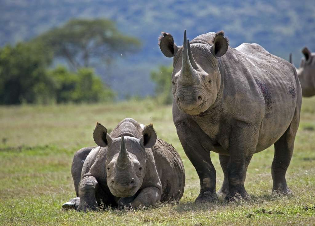 Save the Rhino Day