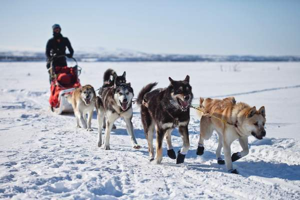 Sled Dog Day