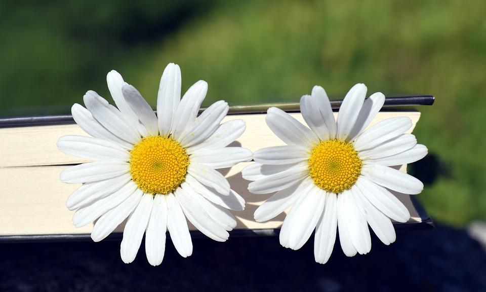 Upsy Daisy Day