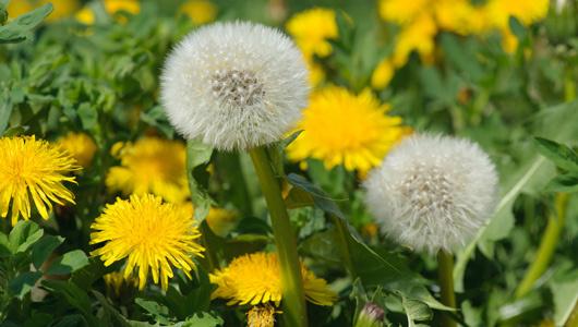 Image result for Weeds Appreciation Day 2019